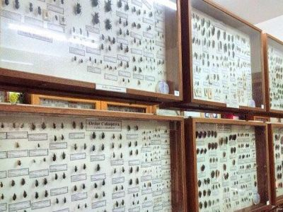 Museum of World Insects and Natural Wonders