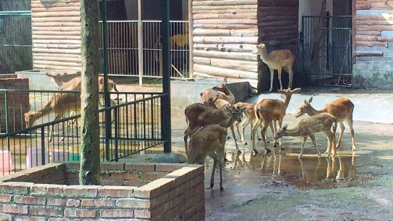 Zunyi Zoo (Northwest Gate 1)