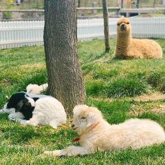 삼환목장 여행 사진