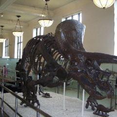 考古與自然歷史博物館用戶圖片