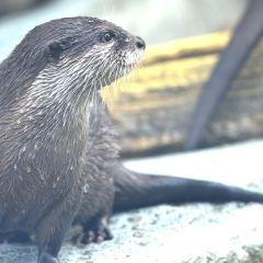 東山動植物園用戶圖片