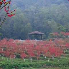 Peach Blossom Valley User Photo