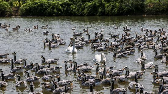 Shuanglong Lake Bird Viewing Garden