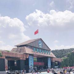 선양 야생동물원 여행 사진