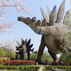 上海顧村恐龍園用戶圖片