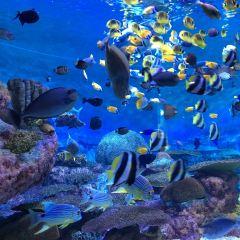 COEX水族館用戶圖片