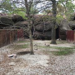 St. Louis Zoo User Photo