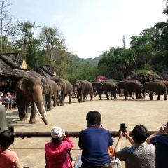 Wild elephant valley User Photo