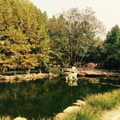 Shenyang Youth Park User Photo