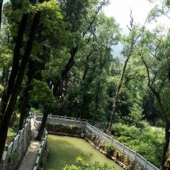 Wenlingjiangsha Forest Park User Photo