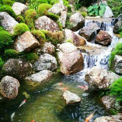 日本村用戶圖片