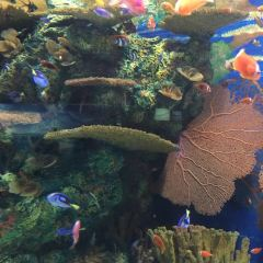 Shanghai Ocean Aquarium User Photo
