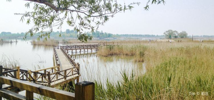 Beijing Wild Duck Lake National Wetland Park1