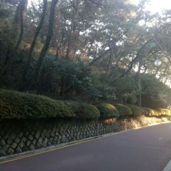 동백공원 여행 사진