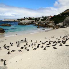 Boulders Penguin Colony User Photo