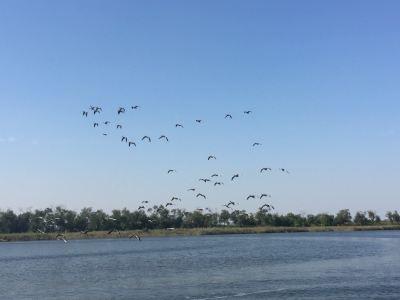 Nandagang Wetland