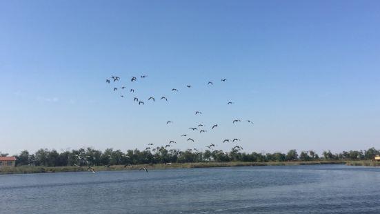 南大港濕地