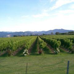 Chard Farm Vineyard User Photo