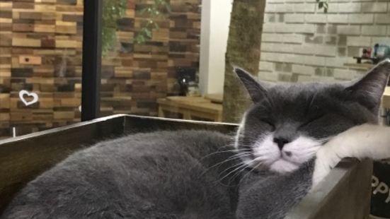 薑姑娘的貓咖啡館(華潤永珍城店)