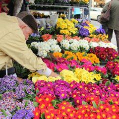Viktualienmarkt User Photo