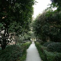 난징 대학 여행 사진