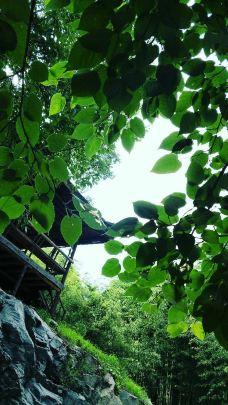 白竹园寺国家森林公园-枣阳-猫的第九只鱼