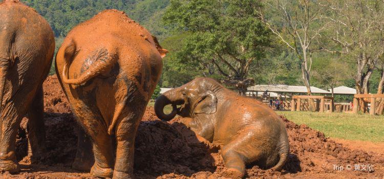 Elephant Nature Park3