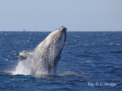Ocean Tracker Dolphin Watching Cruise