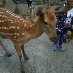 Bifengxia Wildlife Park User Photo