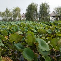 泗洪洪澤湖濕地用戶圖片