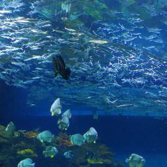 Liaocheng Underwater World User Photo