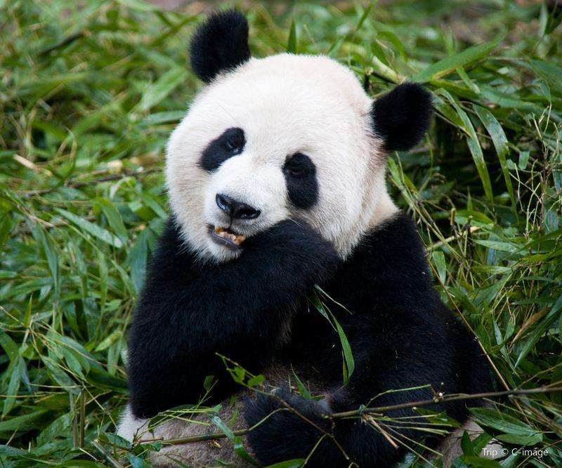 Panda Valley Travel Guidebook Must Visit Attractions In