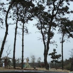 둥하이 산림온천 리조트 여행 사진
