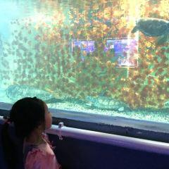 海馬海洋奇幻館用戶圖片