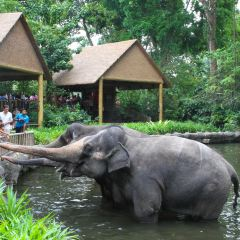 Singapore Zoo User Photo