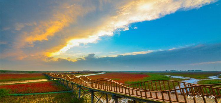 紅海灘國家風景廊道3