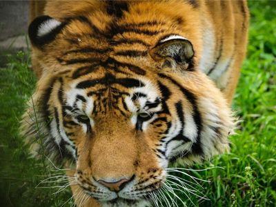 친링 야생동물원(진령 야생동물원)