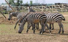 宿州野生动物园-宿州-doris圈圈