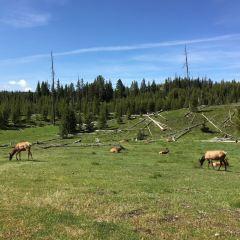 Yellowstone National Park User Photo
