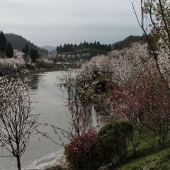 Zunyi Sakura Valley User Photo
