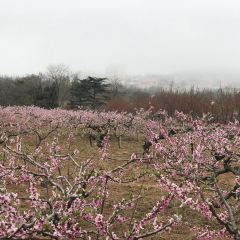 칭다오 식물원 여행 사진