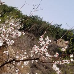 싱룽치스구 여행 사진