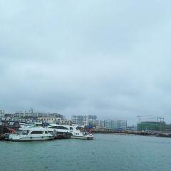 Zhanjiang Black-headed Gull Cruise User Photo