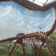 Paleontological Museum of Liaoning User Photo