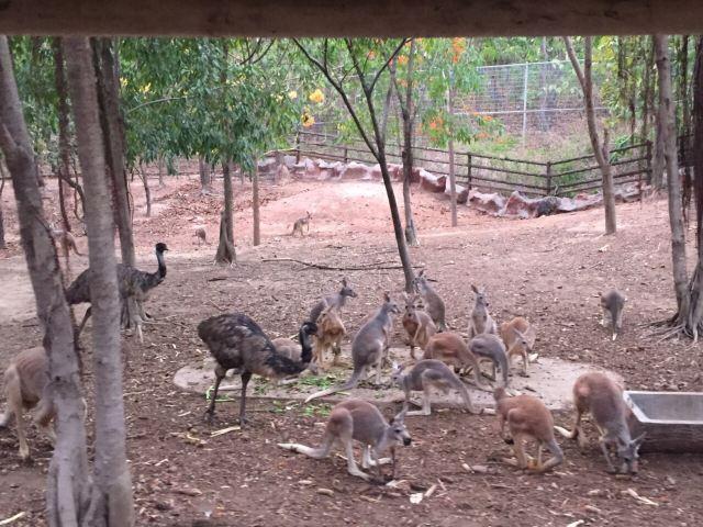 치앙마이 동물원