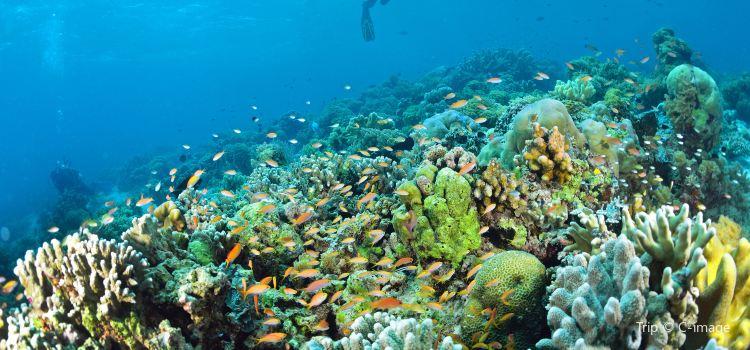 詩巴丹潛水1
