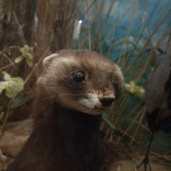 克萊蒙費朗自然歷史博物館用戶圖片