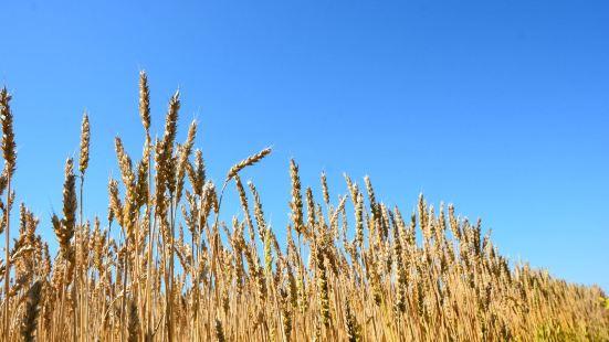 八五〇農場水稻科技園