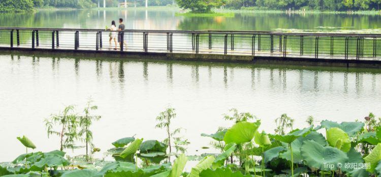 Honghu Park2