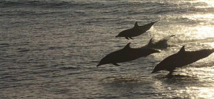 花蓮賞鯨豚